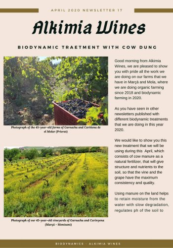 News 17-1 ENG Biodynamic Traetment with Cow Dung