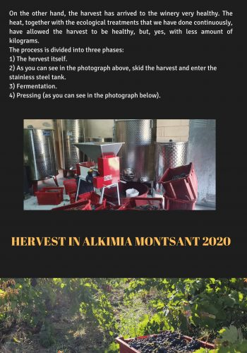 News 27 ENG -2 Hervest in Alkimia Montsant 2020